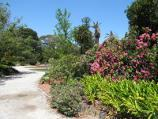 St Kilda / St Kilda Botanical Gardens, Blessington Street / Path through gardens