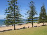 Torquay / Front Beach / Norfolk Pines on the foreshore, opposite Price St