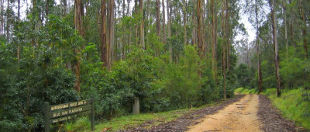 Murrungowar Forest