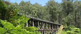Noojee Trestle Bridge Rail Trail