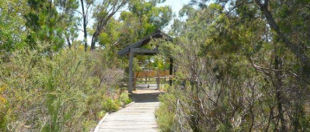 The Pines Flora & Fauna Reserve