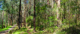 Wright Forest Bushland Reserve