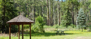 Yarra Ranges National Park