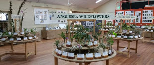 Angair Wildflower & Art Weekend