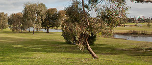 Altona Lakes Golf Course