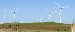 Codrington Wind Farm Tours