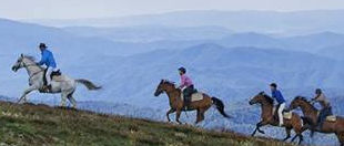 Watson's Mountain Country Trail Rides