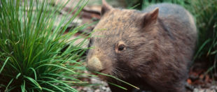 Wombat Discovery Tours