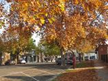 Wangaratta / Commercial centre and shops / Autumn leaves, view north-west along Ely towards Murphy St