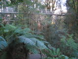 Warburton / Cement Creek and Rainforest Gallery / View towards Rainforest Gallery Skywalk from steps down to forest floor