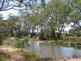 Warracknabeal / Lions Flora and Fauna Park, Yarriambiack Creek / View from west side of creek, southern end of Lions Park