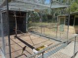 Warracknabeal / Lions Flora and Fauna Park, Yarriambiack Creek / Parrot in bird enclosure, Lions Park