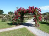 Werribee / Victoria State Rose Garden at Werribee Park, Werribee South / Archway of roses