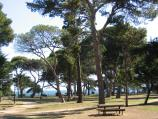 Williamstown / Fearon Reserve and Williamstown Botanic Gardens, Giffard Street / View through Fearon Reserve towards coast