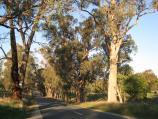 Wodonga / Huon Creek Road / View east along Huon Creek Rd, east of Spring Gully Rd