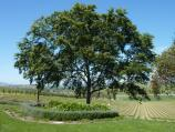 Yarra Glen / De Bortoli Winery, Pinnacle Lane, Dixons Creek / Picnic area overlooking vineyard