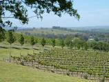 Yarra Glen / De Bortoli Winery, Pinnacle Lane, Dixons Creek / View across vines towards driveway entrance from picnic area