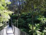 Yarram / Tarra - Bulga National Park / Suspension bridge