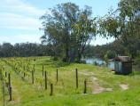 Yea / Goulburn River at Ghin Ghin Road / Vineyard on west side of Ghin Ghin Rd at bridge